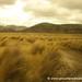 Fields of Gold - Quilotoa Loop, Ecuador