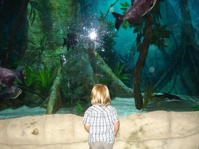 At The Living Planet Aquarium Flickr Photo Sharing
