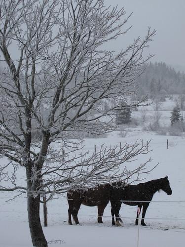 horses icestorm