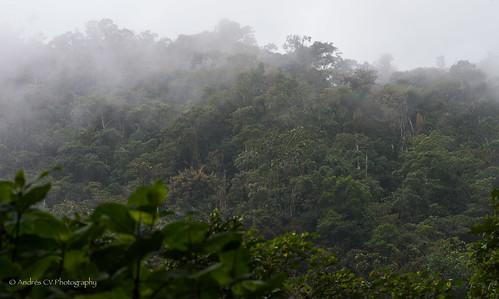 rainforest colombia selva jungle montezuma niebla risaralda bosquehumedo nieblaperpetua tatamá pueblorico parquenacionaltatama