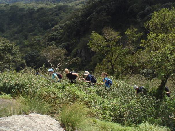 Trekking in Munnar