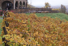 Bluemont Vineyard Vines 5