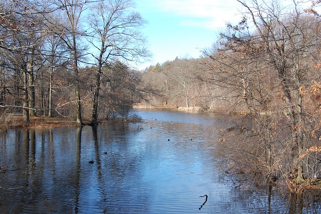 Scarboro Pond, Franklin Park, Boston, MA