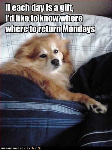 funny-dog-pictures-return-mondays