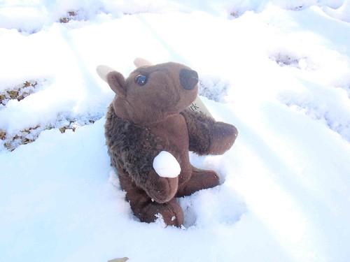 Buddyand snowball