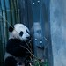 Yun Zi :  Su Lin are you there?