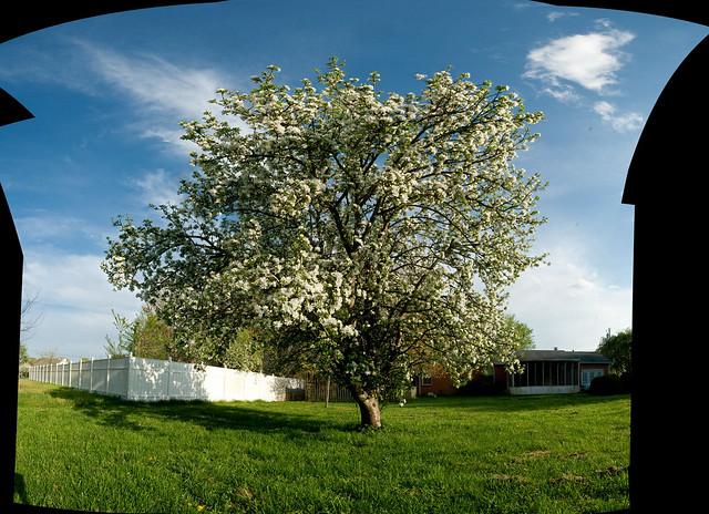 Apple Tree Property Management Los Angeles