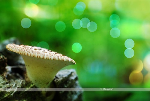 Mushroomed bokeh