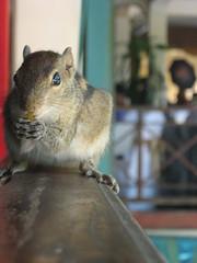 animal(1.0), squirrel(1.0), rodent(1.0), pet(1.0), fauna(1.0), chipmunk(1.0), degu(1.0), whiskers(1.0), gerbil(1.0), wildlife(1.0),