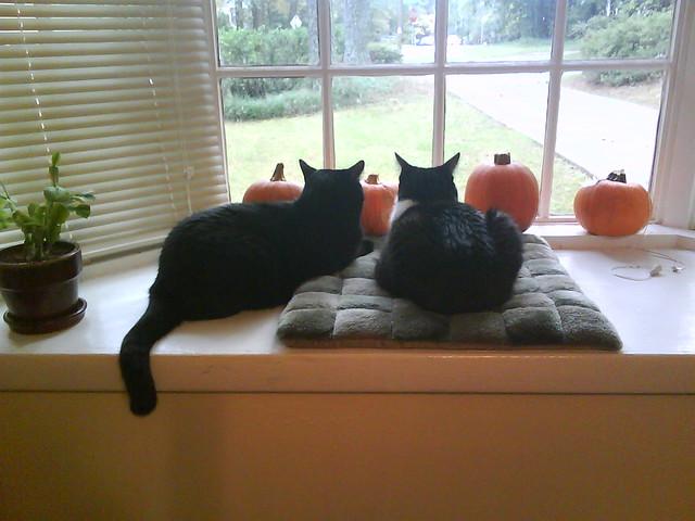 Kitties on the window sill