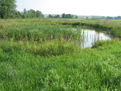 fen, nature reserve, wetland, swamp, floodplain, prairie, land lot, shrub, flower, field, soil, grass, plant, natural environment, meadow, salt marsh, pasture, vegetation, grassland, pond, bog,
