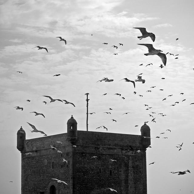 Essaouira 1x1 [more inside]