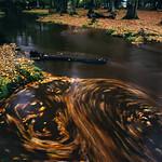 2009-11-NewForest-E09v2