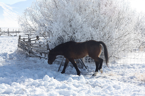 Horse and Frosty Tree