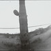 Small photo of Pinhole - Old Saguaro