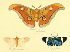 bhl_moths