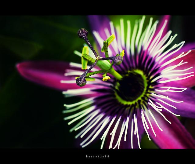 Flower Macro: Color Burst ....  ....  ....[explored]