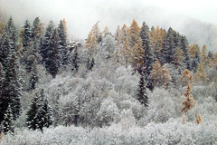 Gressoney Saint Jean - when the snow is coming....