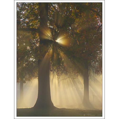 california morning trees sunlight sunshine fog sunrise landscape olympus explore sunburst sacramento e3 magical sacramentocounty 1000views californialandscape zd effieyeaw 1260mm olympuse3