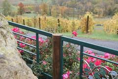 Bluemont Vineyard Flowers