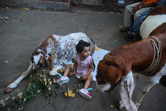 Marziya Shakir and Jimba The Goat by firoze shakir photographerno1