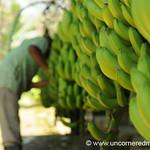 Banana Production Line - Chapare, Bolivia