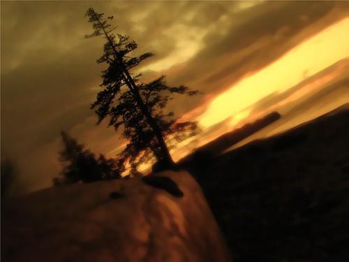 sunset blurry blurred fir tilt firtree birchbay whatcom whatcomcounty cameratilt yellowsunset