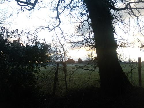 Tree silhouette DSCN8330
