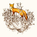 fox by Rodrigo Aviles