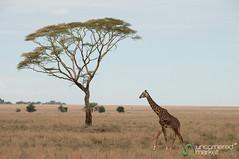 Tanzania Safari - Serengeti, Ngorongoro Crater, Lake Manyara