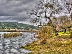 Elizabeth Lake Tree