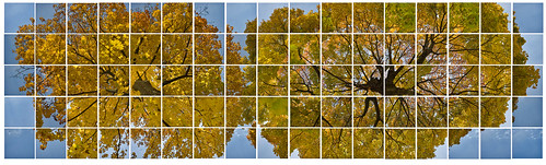 trees sky panorama fall yellow earth mosaic