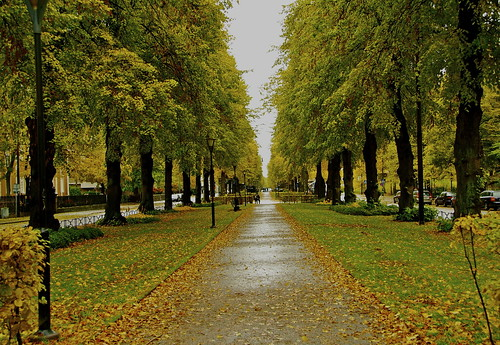 park plaza parque autumn trees wet colors leaves square hojas avenida arboles sweden stockholm colores octubre avenue frio estocolmo suecia humedo otoño coldoctober