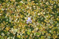 Squeaky in the Leaves