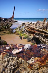 Shells and shipwrecks.