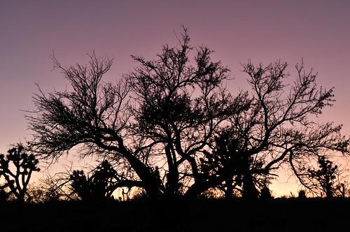 wild arizona grandcanyon canyon lonely lonelyplanet 美国 thewild 大峡谷 westusa 峡谷 美国大峡谷 亚利桑那州 美国西部 侵蚀地貌 约书亚树 乔治亚树
