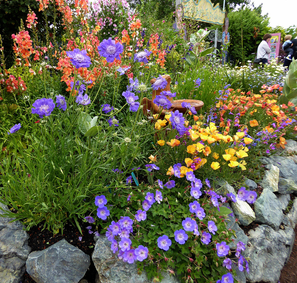 Annie's Annuals and Perennials - Retail and Online Nursery, Buy