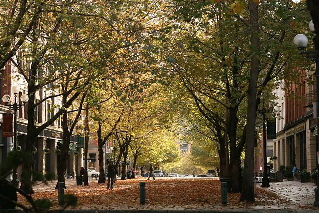 Seattle fall leaves