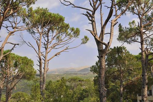 trees lebanon beiteddine pine nikon beirut serge melki topaz beit shouf d300 18200mmf3556gvr eddine mousacastle majesticpinetrees al3itmousa nabi3elsafa lebanonpine