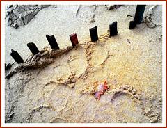 Mid-November Beach Remnants