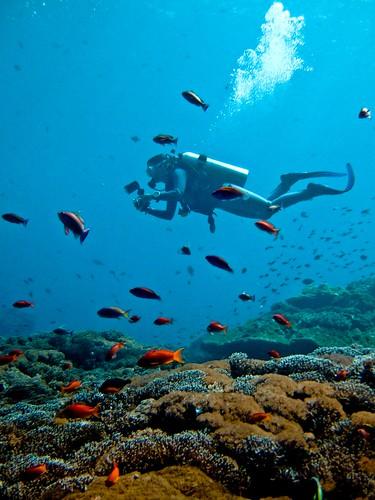 Scuba diving Bali Nusa Lembongan