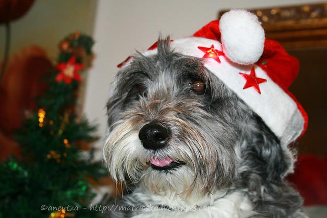 foto divertente cane con cappello di Babbo natale