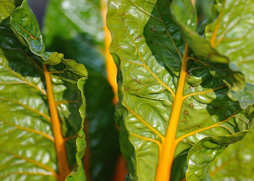What To Plant In March 15 Summer And Autumn Vegetables To
