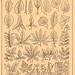 Brockhaus & Efron Encyclopedic Dictionary