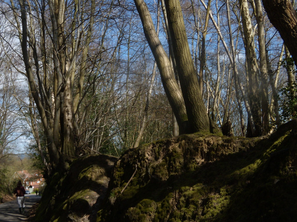 Rocks and trees Cowden to Hever