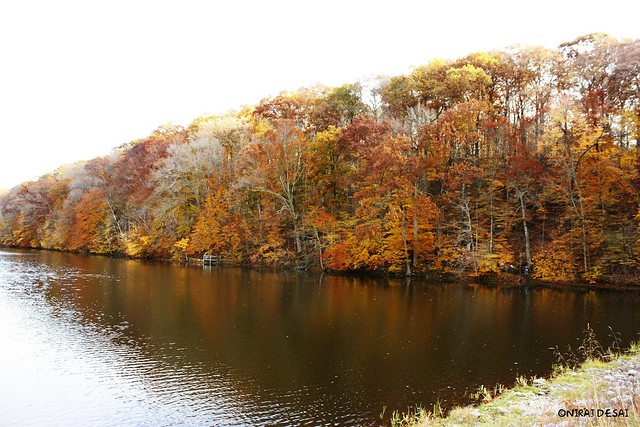 Fall colors @ brown county state park