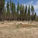 Angora Fire Survey Site D