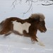 Small photo of Ginger Powers Through The Snow