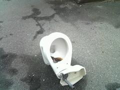 Destroyed, abandoned toilet
