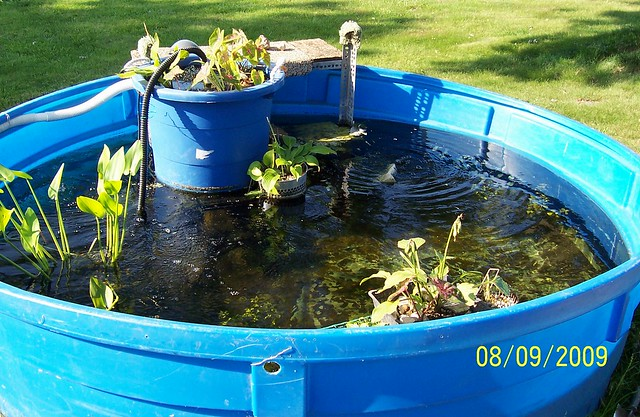 Z pool fish pond flickr photo sharing for Koi pond next to pool